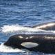 tour-observación-ballenas-conil -tarifa